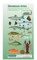Fischkartenset Süsswasser Fischbestimmung