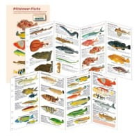 Fischkartenset Mittelmeer Fischbestimmung