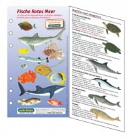 Fischkartenset Rotes Meer Fischbestimmung