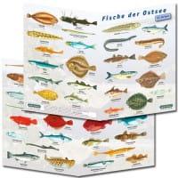 Fischfaltblatt Ostsee